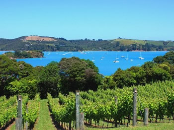 Waiheke Vineyards & Wineries