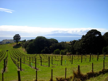 Vineyards & Wineries on Waiheke Island