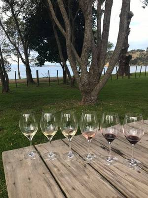 Man o War Bay Winery Waiheke Island wine glasses lined up in a row on a picnic table beside the bay
