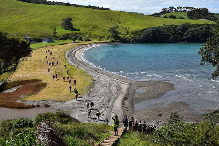 people walking along the beachfront reserve with the beach and sea to the right at the Waiheke Walking Festival